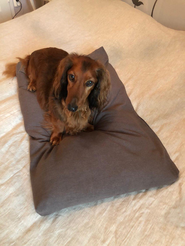 Kouvolassa ompelija koiralle peti